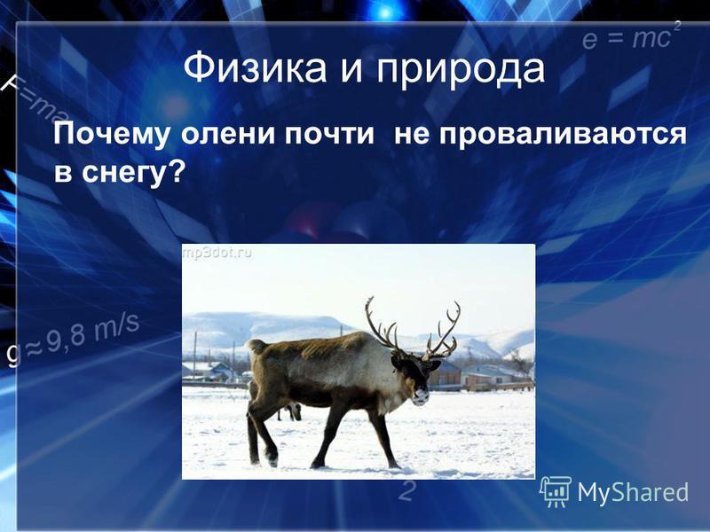 Физика и природа Почему олени почти не проваливаются в снегу?