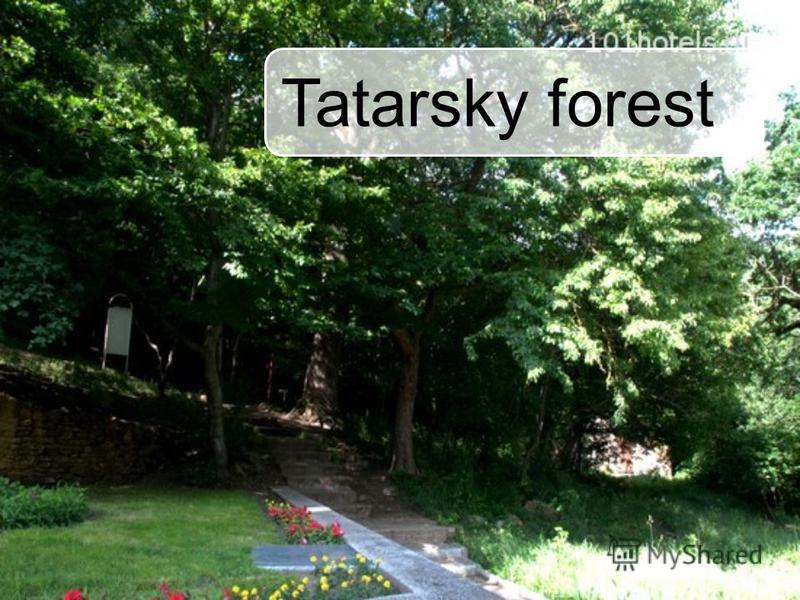 Tatarsky forest