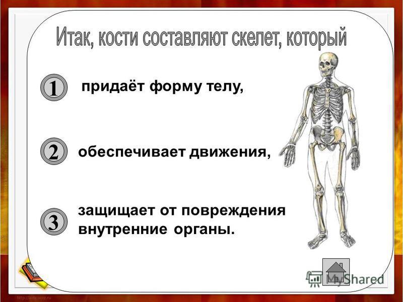 тазовая кость бедренная кость большеберцовая кость малоберцовая кость кости стопы бедро голень