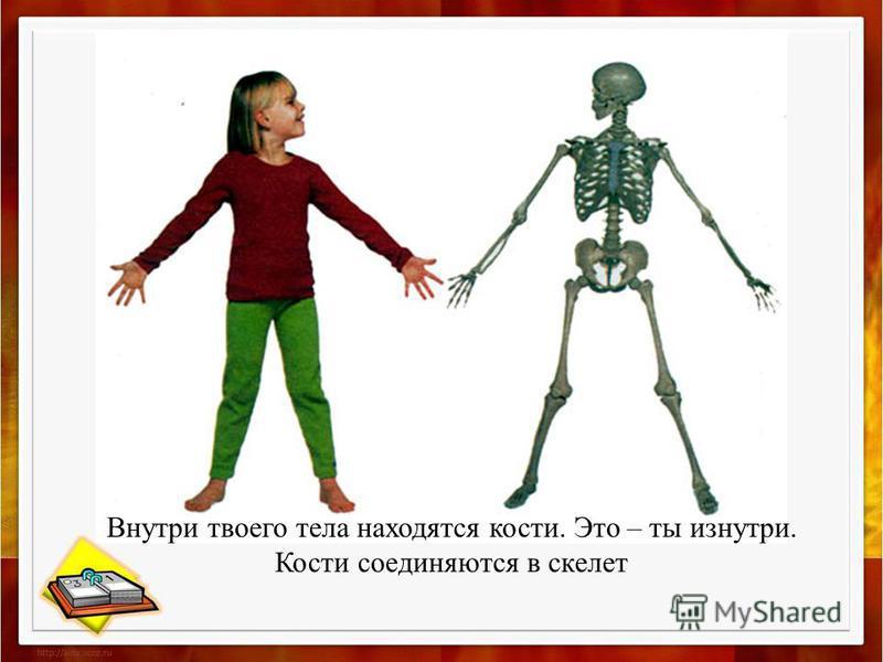 Тело, данное вам при рождении, построено из миллиона крошечных кирпичиков – живых клеток. Форму и устойчивость телу придает каркас из костей – скелет. Эта сложная система функционирует, подчиняясь приказам головного мозга. Благодаря согласованной раб