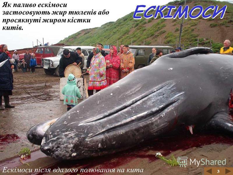 Полювання ескімосів на кита 3 Ескімоси є хорошими мисливцями. Вони полюють на китів, тюленів, моржів, білих ведмедів, вівцебиків. Хутро, шкіри та сухожилки тварин використовують для пошиття одягу. Video