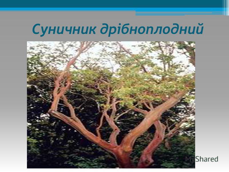 Дерева: сосна кримська, дуб скельний, дуб пухнастий, сосна Станкевича, суничник дрібноплодний. Кущі: фісташка, пікаранта червона, жасмін кущовий. Трави: півон вузьколистий, любка дволиста, Рослинність Кримських гір