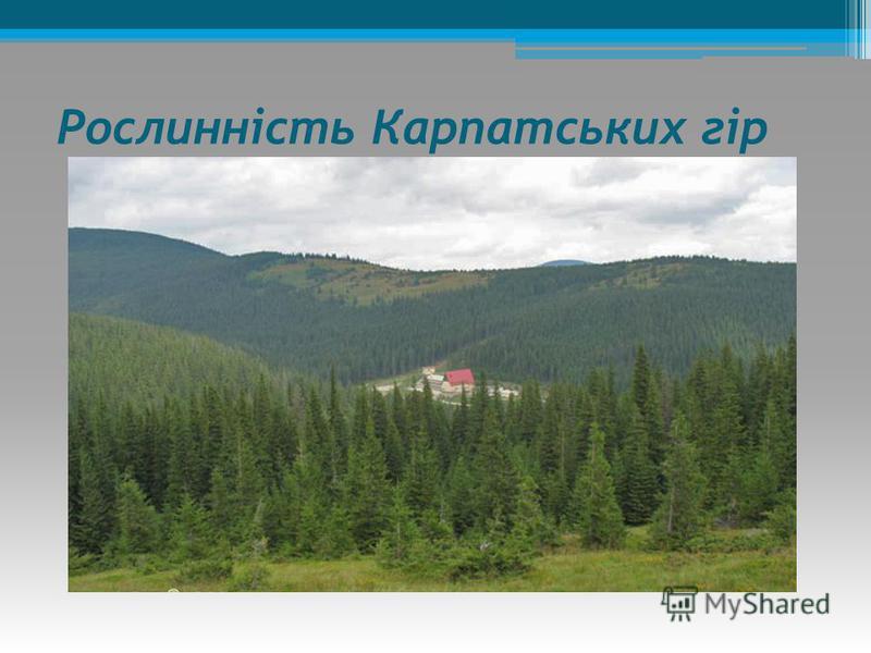 Рослинність Карпатських гір Дерева: смерека, сосна гірська, вяз,бук, явір,тис ягідний. Кущі: верба козяча, ліщина. Трави: едельвейс, айстра альпійська, дзвоники карпатські.