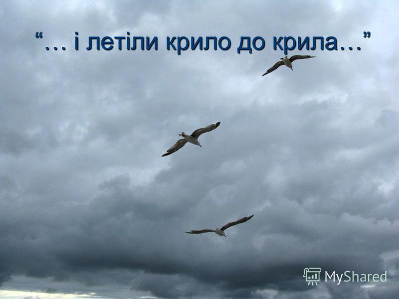 … і летіли крило до крила…