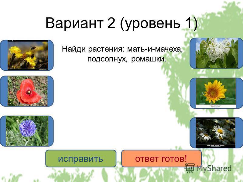 Вариант 2 (уровень 1) Найди растения: мать-и-мачеха, подсолнух, ромашки. ДА НЕТ исправить ответ готов!
