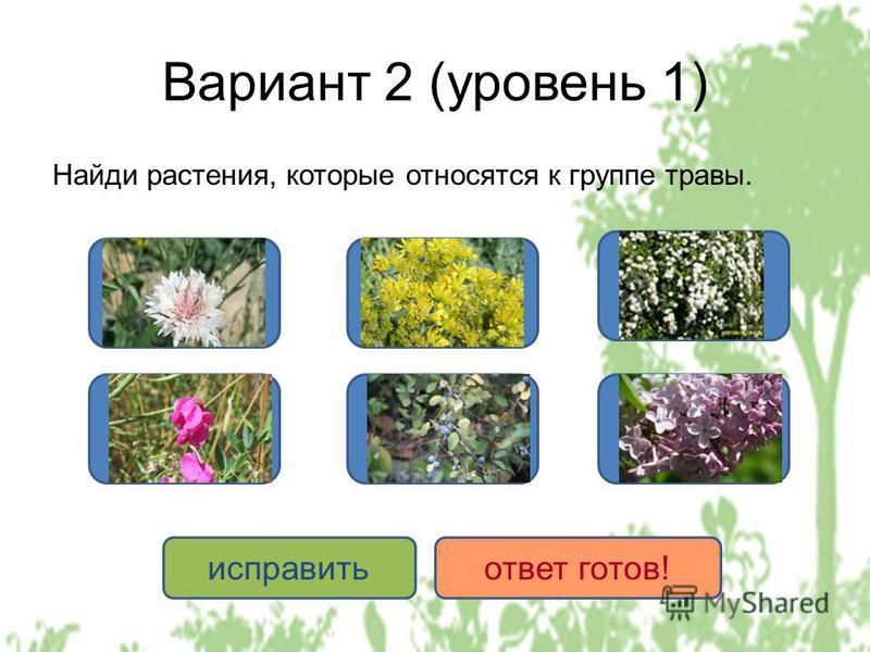 Вариант 2 (уровень 1) Найди растения, которые относятся к группе травы. ДА НЕТ исправить ответ готов!