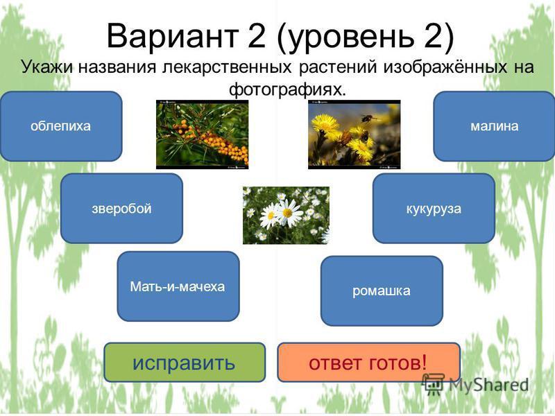 Вариант 2 (уровень 2) Укажи названия лекарственных растений изображённых на фотографиях. облепиха Мать-и-мачеха ромашка зверобой малина кукуруза исправить ответ готов!
