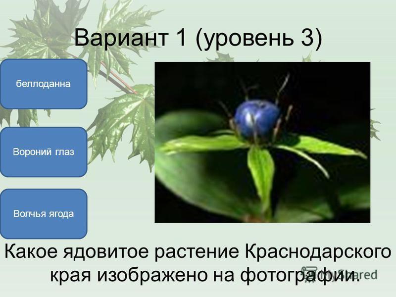 Вариант 1 (уровень 3) Вороний глаз белладонна Волчья ягода Какое ядовитое растение Краснодарского края изображено на фотографии.