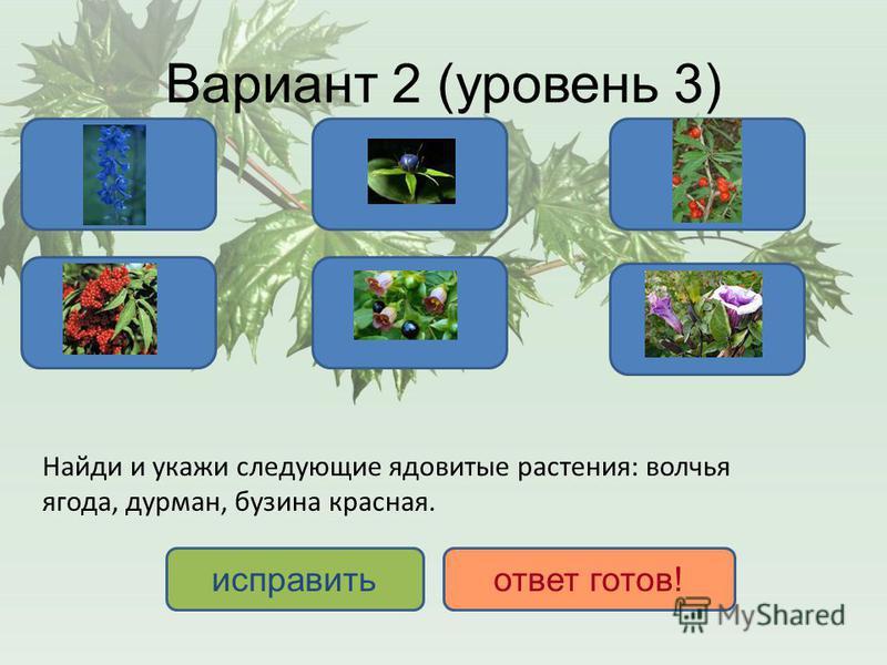 Вариант 2 (уровень 3) ДА НЕТ исправить ответ готов! Найди и укажи следующие ядовитые растения: волчья ягода, дурман, бузина красная.