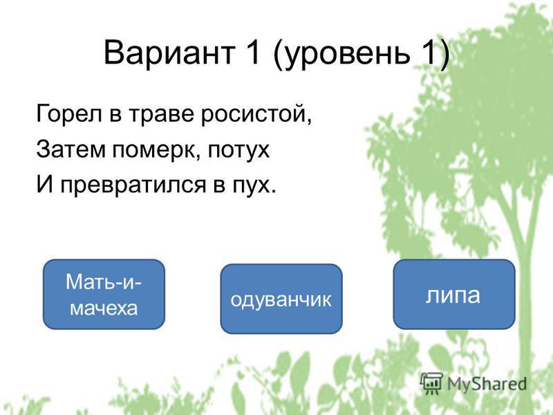 Вариант 1 (уровень 1) Горел в траве росистой, Затем померк, потух И превратился в пух. одуванчик Мать-и- мачеха липа