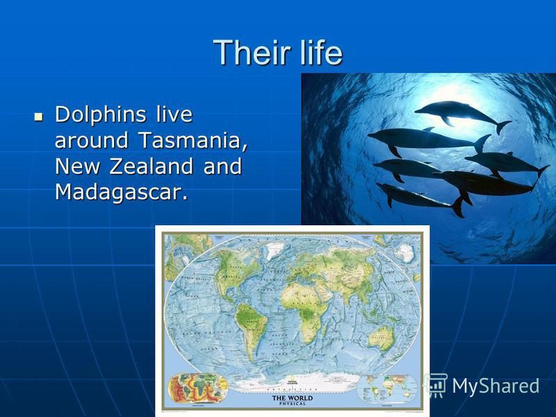 Their life Dolphins live around Tasmania, New Zealand and Madagascar.
