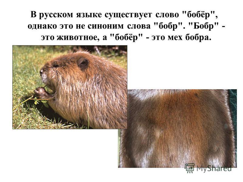 Грызуны оренбургской области