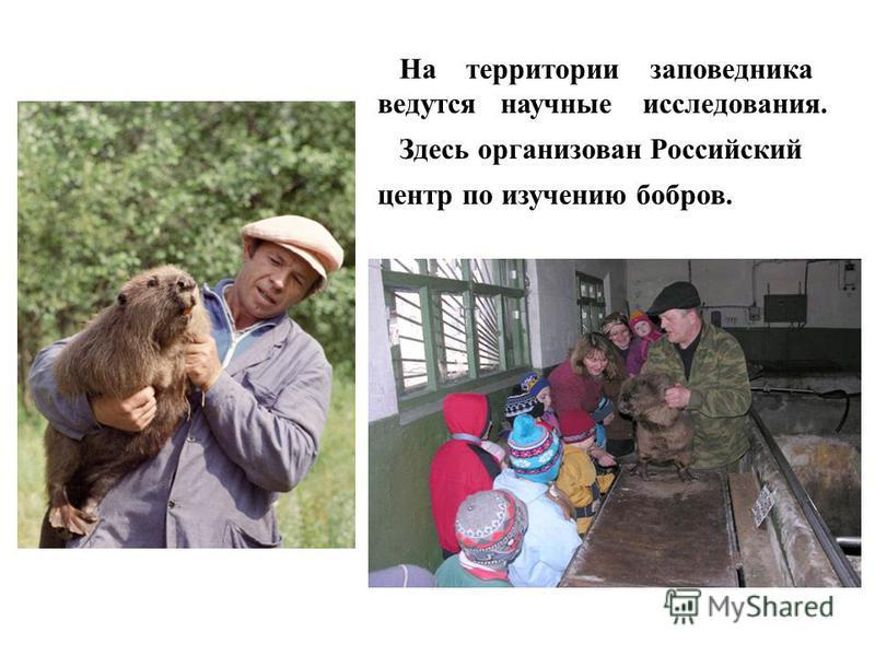 На территории заповедника ведутся научные исследования. Здесь организован Российский центр по изучению бобров.
