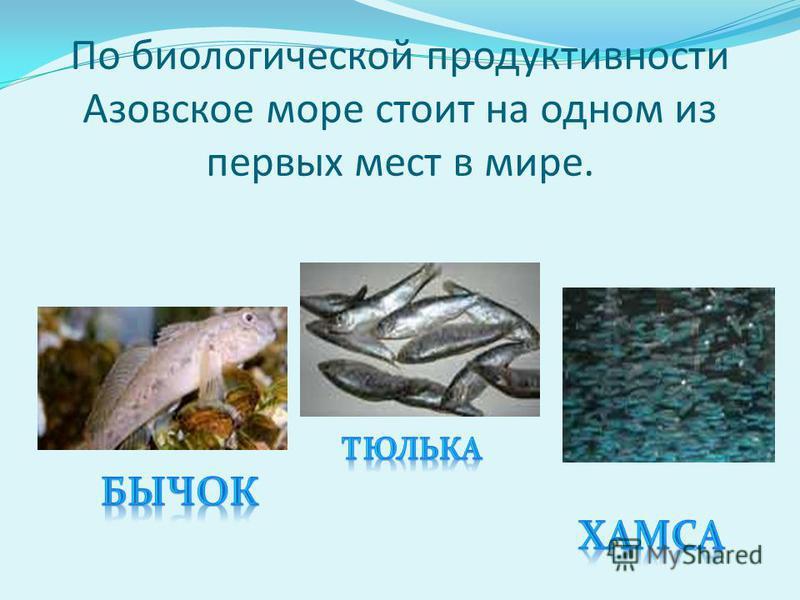 По биологической продуктивности Азовское море стоит на одном из первых мест в мире.