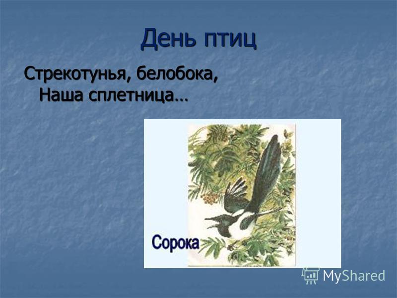 День птиц Стрекотунья, белобока, Наша сплетница… Стрекотунья, белобока, Наша сплетница…