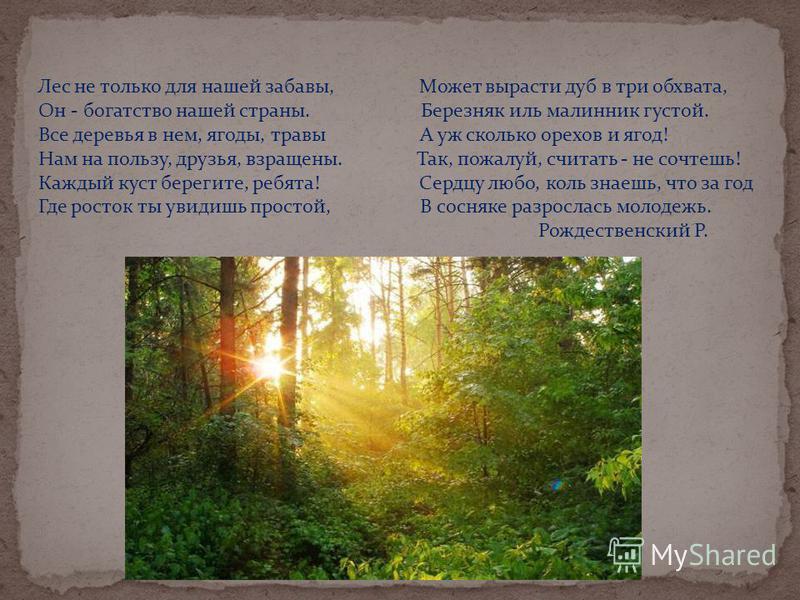 Лес не только для нашей забавы, Может вырасти дуб в три обхвата, Он - богатство нашей страны. Березняк иль малинник густой. Все деревья в нем, ягоды, травы А уж сколько орехов и ягод! Нам на пользу, друзья, взращены. Так, пожалуй, считать - не сочтеш
