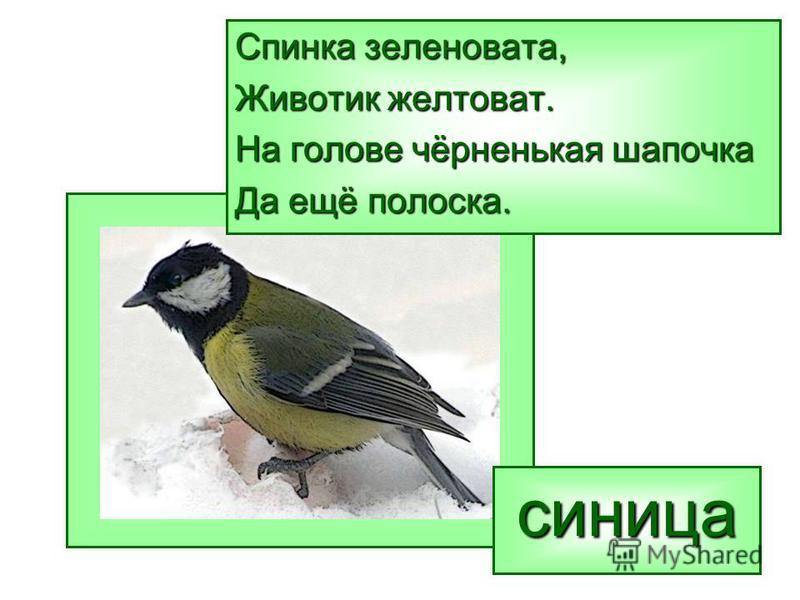 Спинка зеленовата, Животик желтоват. На голове чёрненькая шапочка Да ещё полоска. синица