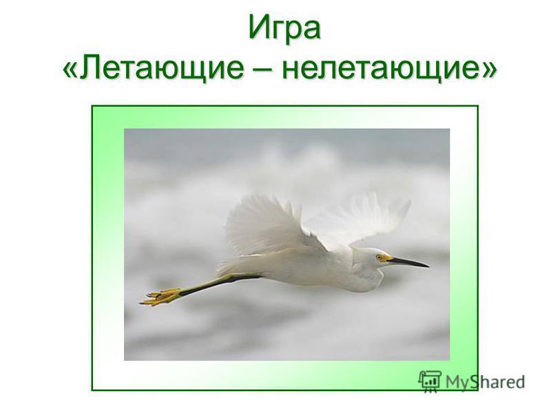 Игра «Летающие – нелетающие» Игра «Летающие – нелетающие»