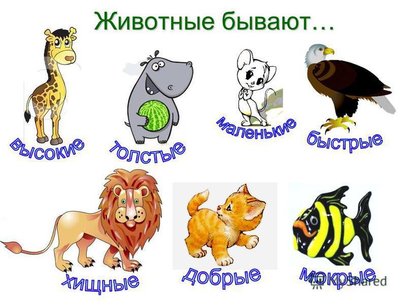 Животные бывают… Животные бывают…