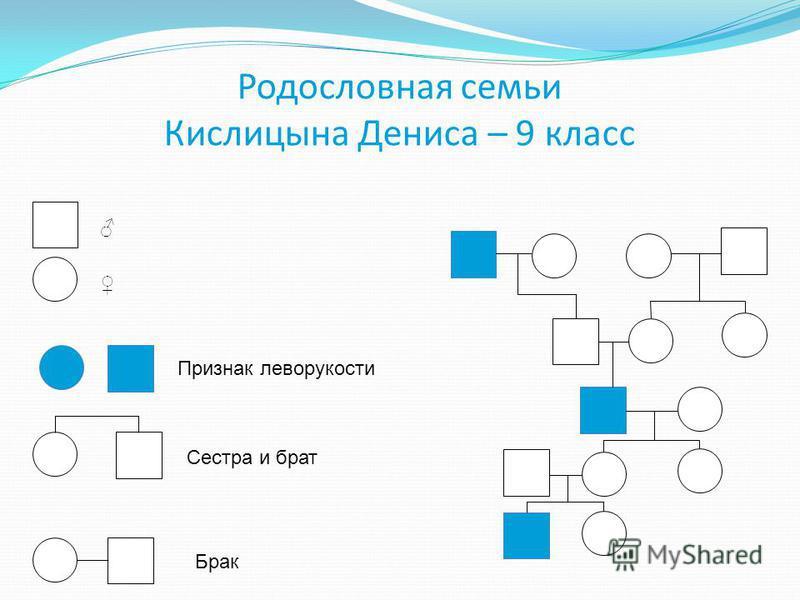Родословная семьи Кислицына Дениса – 9 класс Признак леворукости Сестра и брат Брак
