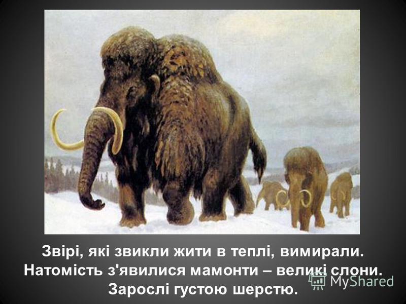 Звірі, які звикли жити в теплі, вимирали. Натомість з'явилися мамонти – великі слони. Зарослі густою шерстю.
