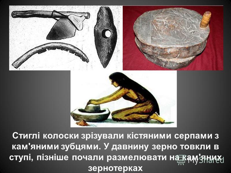 Стиглі колоски зрізували кістяними серпами з кам'яними зубцями. У давнину зерно товкли в ступі, пізніше почали размелювати на кам'яних зернотерках