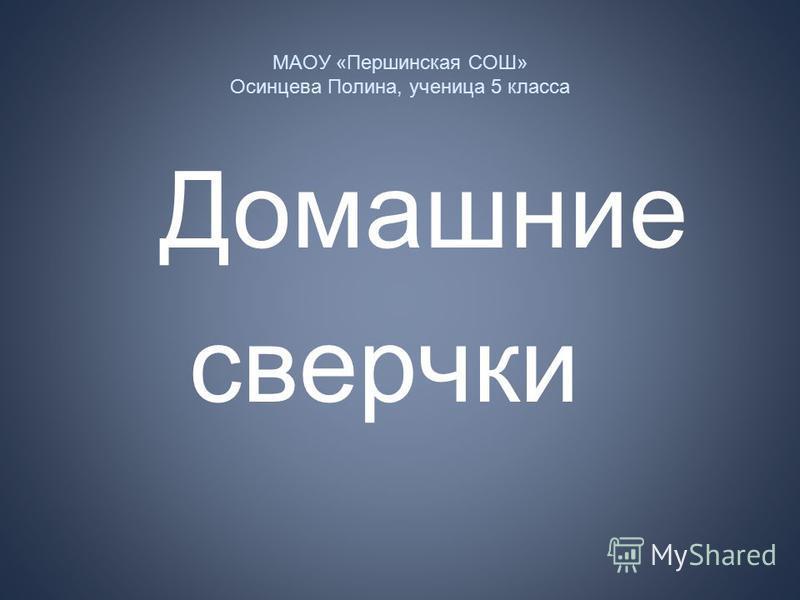 МАОУ «Першинская СОШ» Осинцева Полина, ученица 5 класса Домашние сверчки