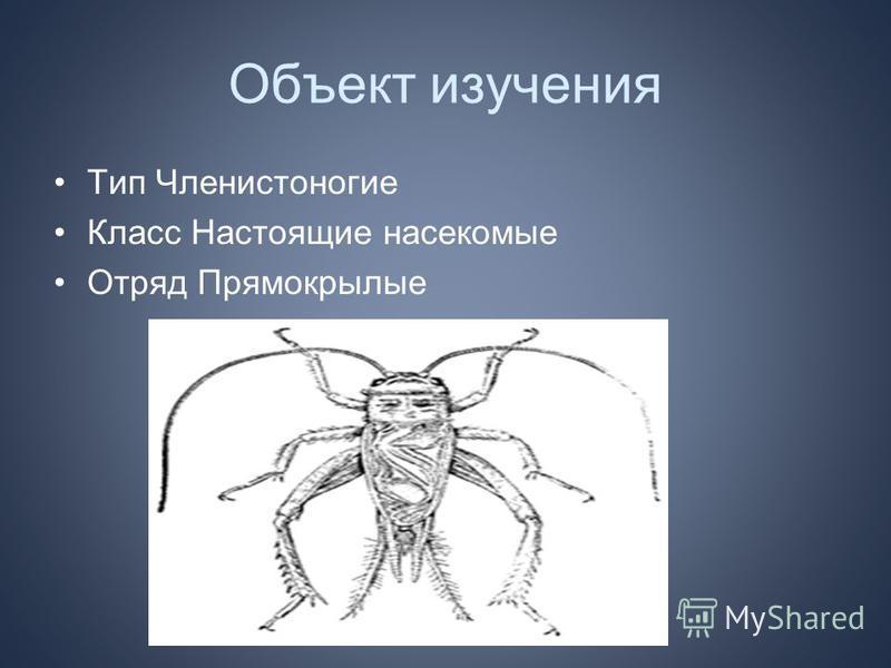 Объект изучения Тип Членистоногие Класс Настоящие насекомые Отряд Прямокрылые