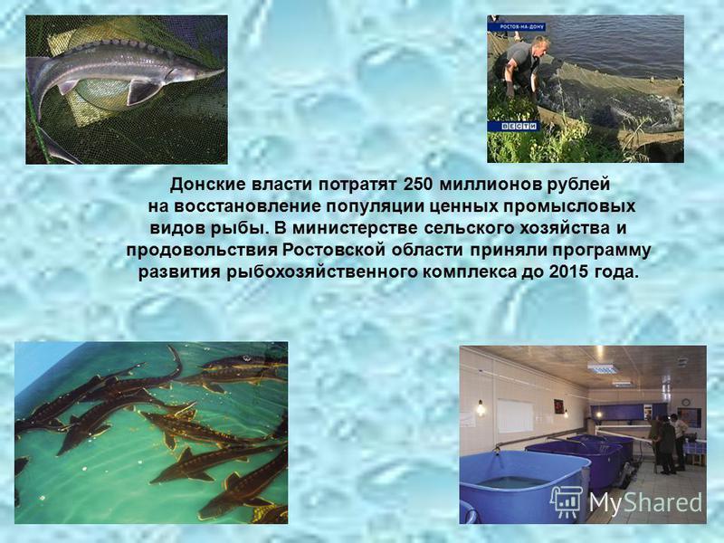 Донские власти потратят 250 миллионов рублей на восстановление популяции ценных промысловых видов рыбы. В министерстве сельского хозяйства и продовольствия Ростовской области приняли программу развития рыбохозяйственного комплекса до 2015 года.