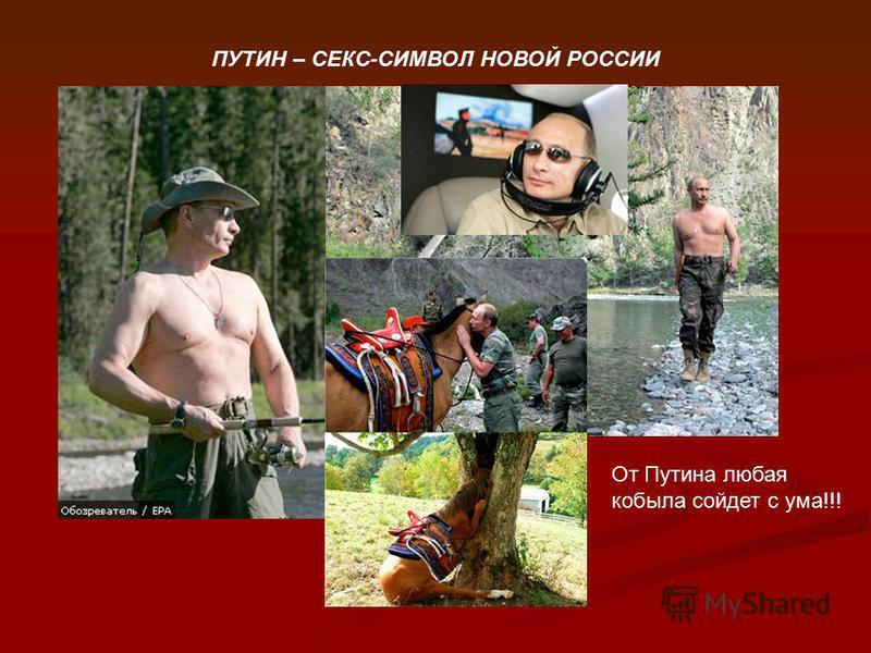 ПУТИН – СЕКС-СИМВОЛ НОВОЙ РОССИИ От Путина любая кобыла сойдет с ума!!!