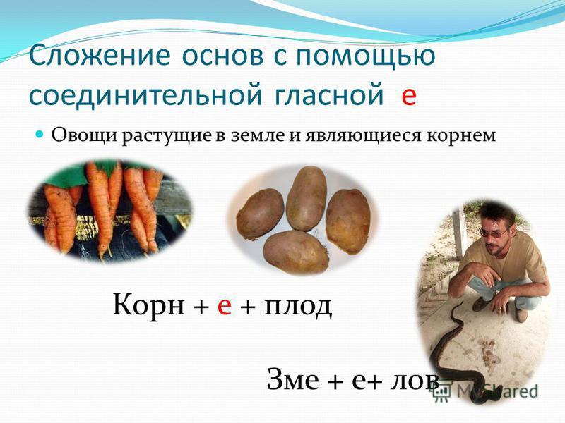 Сложение основ с помощью соединительной гласной е Овощи растущие в земле и являющиеся корнем Корн + е + плод Зме + е+ лов