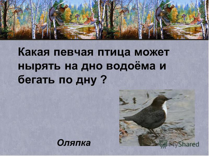 Какая певчая птица может нырять на дно водоёма и бегать по дну ? Оляпка