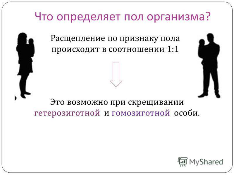 Что определяет пол организма ? Расщепление по признаку пола происходит в соотношении 1:1 Это возможно при скрещивании гетерозиготной и гомозиготной особи.