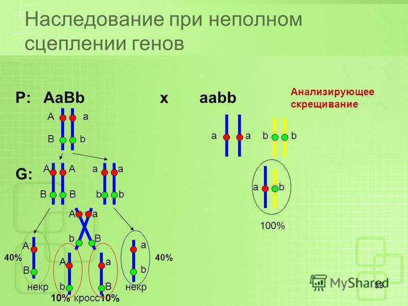 Наследование при неполном сцеплении генов 39 Р: AaBb x aabb G: А a B b a b Анализирующее скрещивание ab 100% A A a a B B b b A B abab A a b B A a b B некр некр 10% кросс 10% 40%