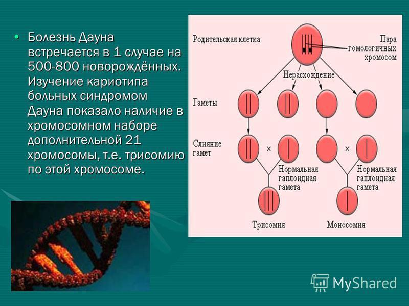 Болезнь Дауна встречается в 1 случае на 500-800 новорождённых. Изучение кариотипа больных синдромом Дауна показало наличие в хромосомном наборе дополнительной 21 хромосомы, т.е. трисомию по этой хромосоме.Болезнь Дауна встречается в 1 случае на 500-8