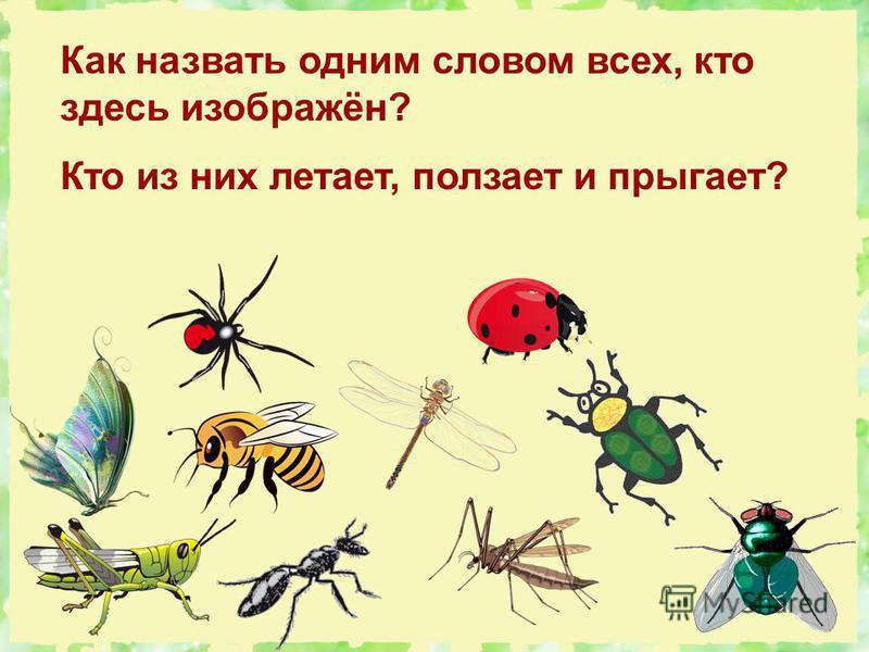 Как назвать одним словом всех, кто здесь изображён? Кто из них летает, ползает и прыгает?