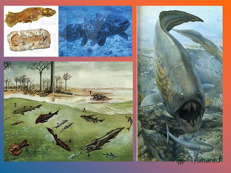 Девон В результате поднятия суши и сокращения морей климат девона более континентальный. Появляются пустынные и полупустынные области. В морях настоящие рыбы, вытеснившие панцирных бесчелюстных. На суше появляются первые леса из гигантских папоротник