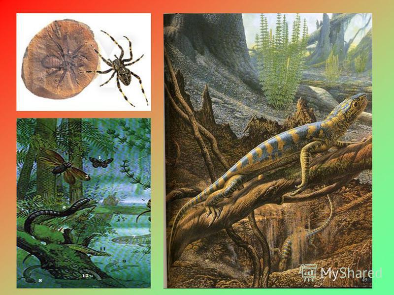 Карбон Потепление и увлажнение климата. В жарких болотистых лесах огромные хвощи, плауны и папоротники. Распространение голосеменных. Расцвет стегоцефалов. Появляются крылатые насекомые. В конце карбона похолодание, поднятие суши и первые пресмыкающи
