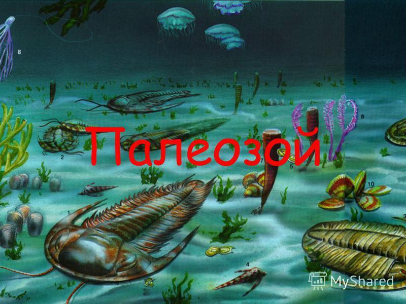 Презентация по биологии на тему: «Палеозой» Подготовила ученица 11 А класса Кузьменко Елена