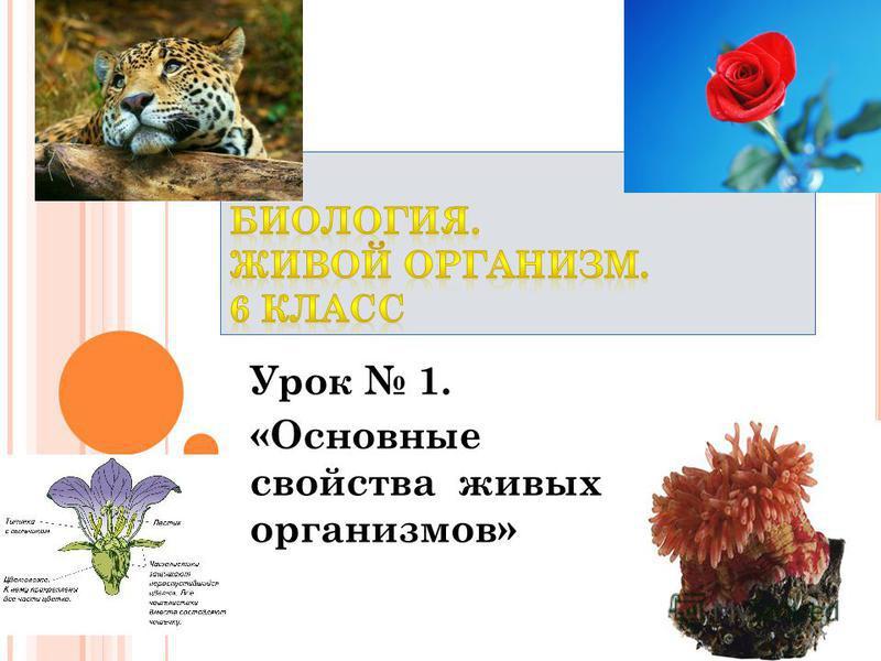 Урок 1. «Основные свойства живых организмов»