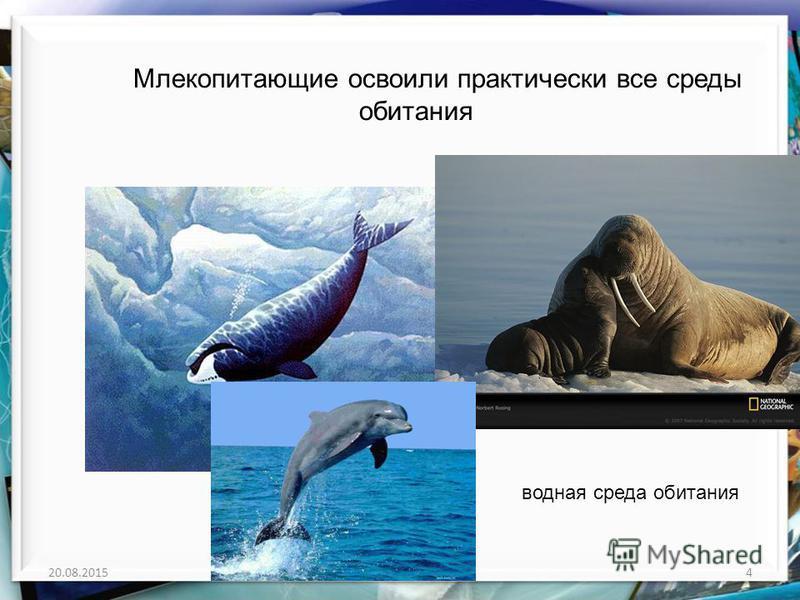 20.08.20154http://aida.ucoz.ru Млекопитающие освоили практически все среды обитания водная среда обитания