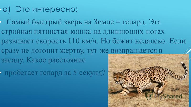 а) Это интересно: Самый быстрый зверь на Земле = гепард. Эта стройная пятнистая кошка на длиннющих ногах развивает скорость 110 км/ч. Но бежит недалеко. Если сразу не догонит жертву, тут же возвращается в засаду. Какое расстояние пробегает гепард за
