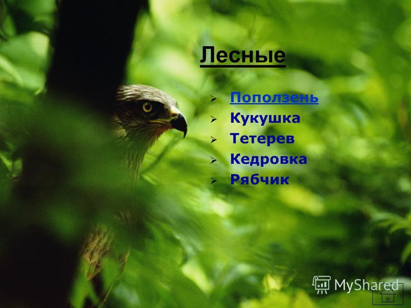 Лесные Поползень Кукушка Тетерев Кедровка Рябчик