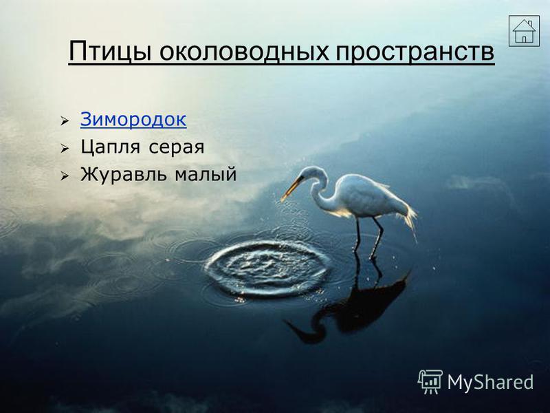 Птицы околоводных пространств Зимородок Цапля серая Журавль малый