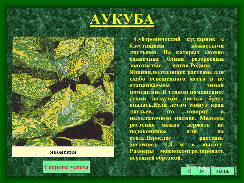 АМАРИЛЛИС Луковичное растение с огромной (до 20 см в диам.) луковицей, и розеткой из ремне видных листьев до 60 см длиной и 6-7 см шириной. Цветки собраны по 2-4 в зонтиковидном соцветии на крепком безлистном цветоносе до 100-120 см высотой. Околоцве