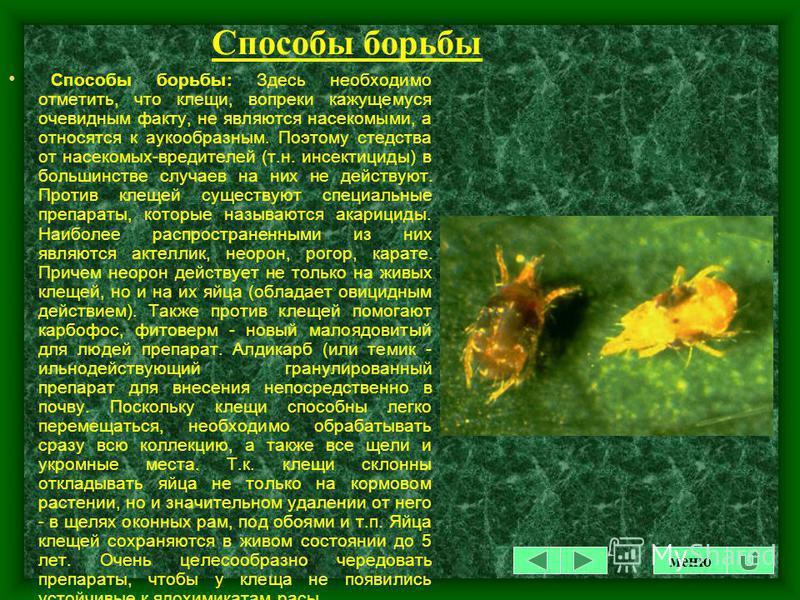 Профилактические мероприятия Профилактические мероприятия: Ускоренному развитию и размножению паутинного клеща способствует тепло и сухость. Соответственно преимущественно поражаются растения, требующие такого содержания, или вынужденные находиться в
