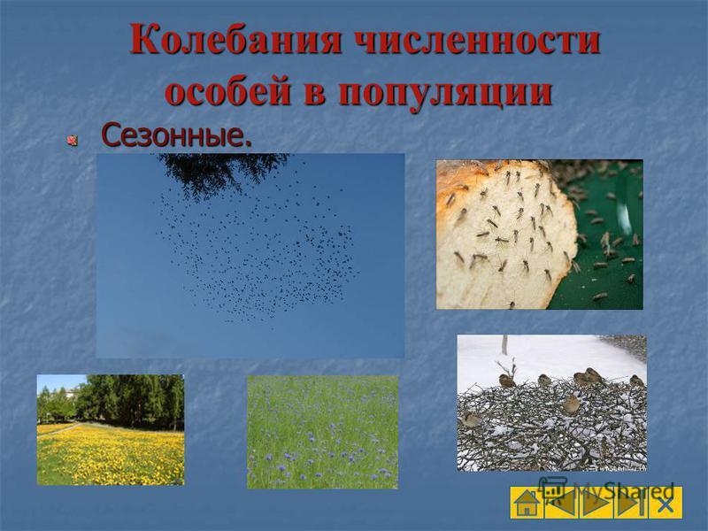 Колебания численности особей в популяции Колебания численности особей в популяции Сезонные. Сезонные.
