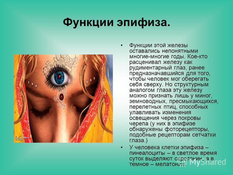 Функции эпифиза. Функции этой железы оставались непонятными многие-многие годы. Кое-кто расценивал железу как рудиментарный глаз, ранее предназначавшийся для того, чтобы человек мог оберегать себя сверху. Но структурным аналогом глаза эту железу можн