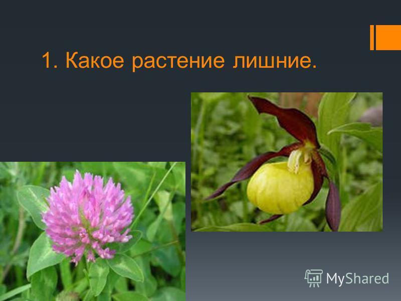 1. Какое растение лишние.