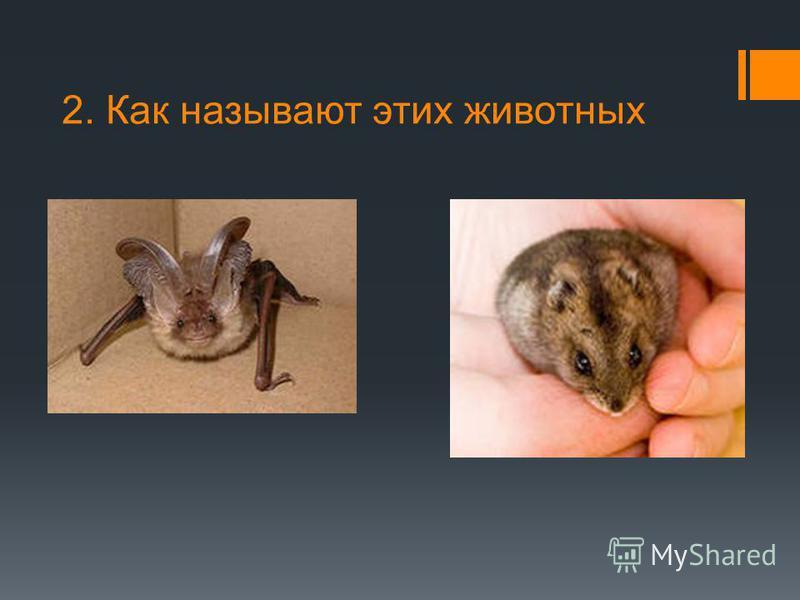 2. Как называют этих животных